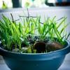 Easter Garden DIY Tutorial - Easter Activities for Kids